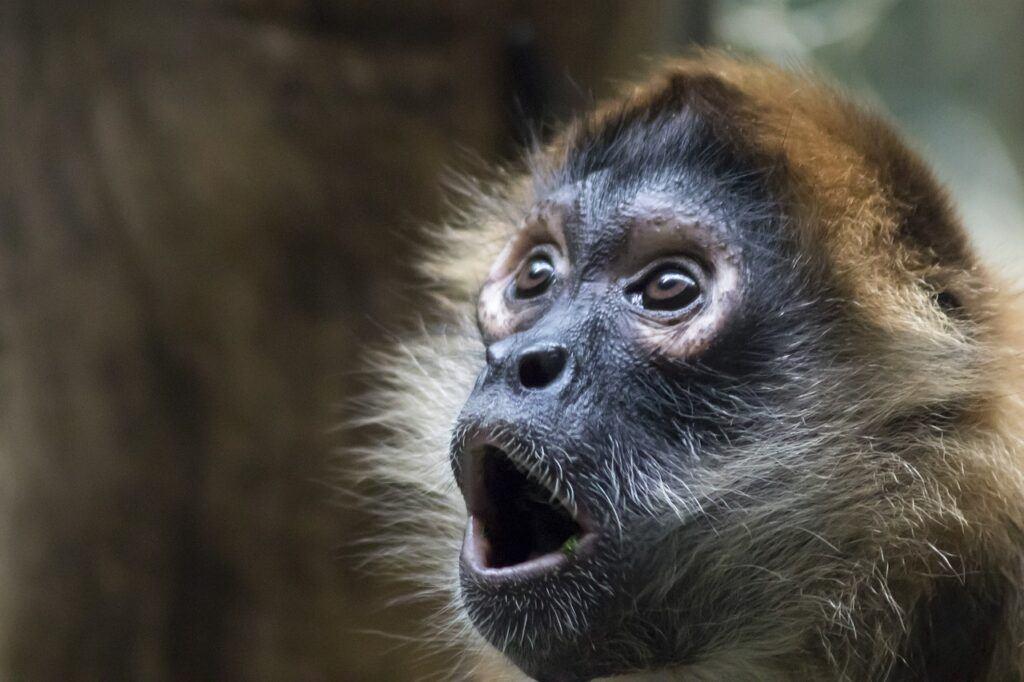 monkey 4839012 1280